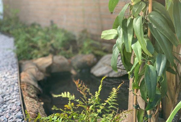 de levende tuin callantsoog